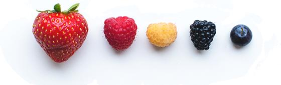 owoce-na-pasku